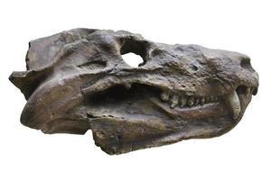 crâne de dinosaure photo