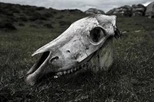 crâne de cheval photo