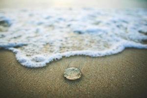 mer de bulle de méduses