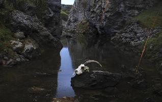 crâne de chèvre dans un étang photo