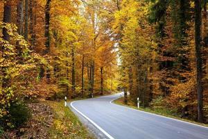 forêt d'automne colorée