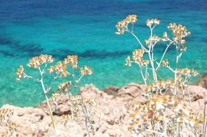 Paysage d'été pittoresque pittoresque de la côte dalmate, Croatie photo