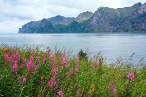 côte d'été de senja (norvège) photo