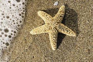 étoile de mer et lever du soleil sur la plage. photo