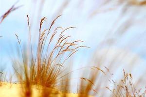 herbe de bord de mer photo