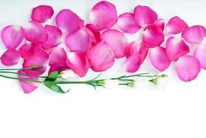 fond avec des pétales de rose et des fleurs photo