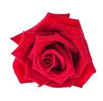 une rose photo