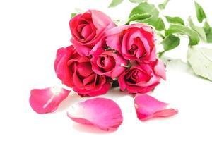 rose rouge photo