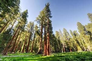 parc national de sequoia photo