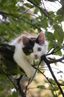mignon chaton reposant sur la branche d'arbre