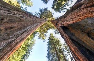 parc national de sequoia photo