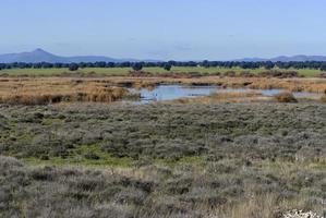 tableaux damiel du parc national des zones humides. photo