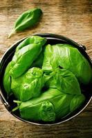 basilic vert photo