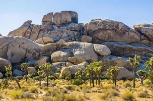 rochers pittoresques dans le parc national de joshua tree photo