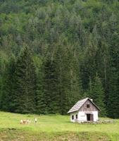 pâturage dans la vallée de pisnica