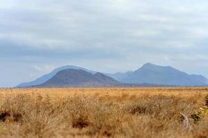 Paysage dans le parc national de tsavo, kenya