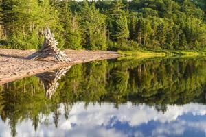 Arbre de bois flotté sur la plage du lac Warren