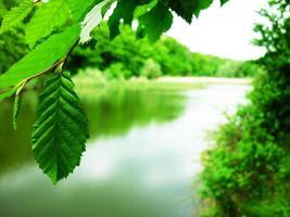 printemps vert