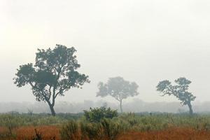 arbres dans la brume photo