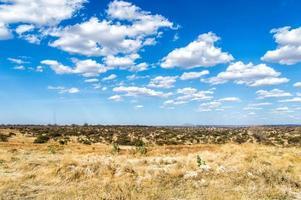 Serengeti, Tanzanie, Afrique