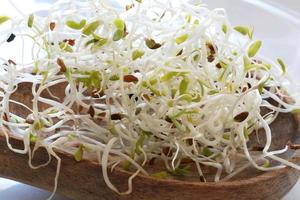 Photographie de modèle de graines de luzerne germées pour fond de nourriture photo