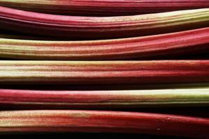 tiges de rhubarbe fraîchement cueillies photo