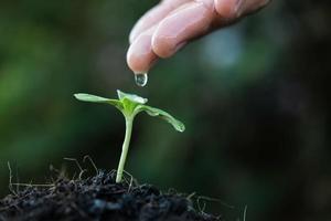 Gros plan d'une personne arrosant à la main une jeune plante