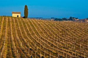 vignoble toscan photo