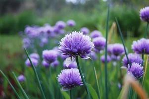 fleurs dans un jardin