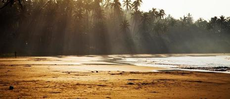 plage tropicale à l'aube