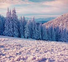 matin d'hiver ensoleillé dans les montagnes des Carpates