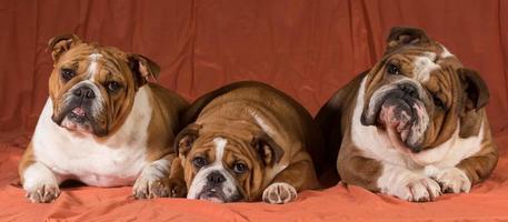 trois chiens photo