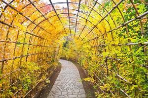 feuilles d'érable japonais en automne