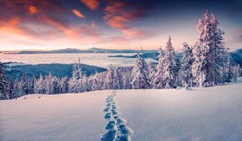 Lever de soleil d'hiver brumeux dans la montagne enneigée