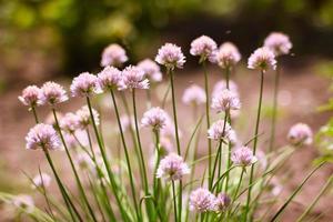fleurs et abeille photo