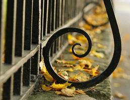 la clôture et les feuilles jaunes