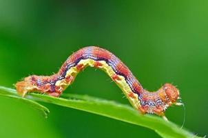 chenille colorée