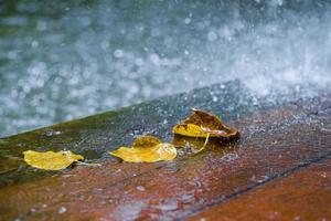 feuilles et pluie - images de stock libres de droits