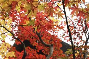 feuilles d'automne les feuilles d'automne