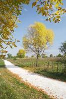 chemin d'automne photo