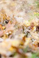 plancher d'automne