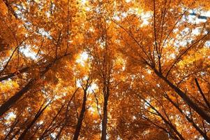 arbres d'automne