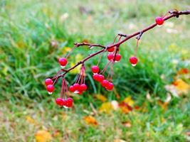 baies d'automne