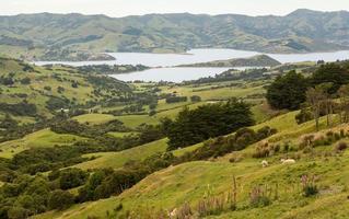 Littoral à Akaroa en Nouvelle-Zélande photo