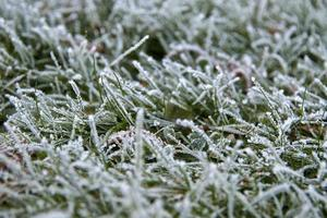 givre sur les brins d'herbe