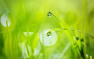 gouttes d'eau sur l'herbe photo
