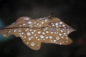 feuille avec des gouttelettes de pluie
