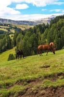 chevaux de pâturage dans les dolomites photo
