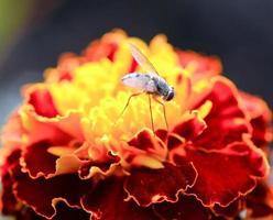 insecte sur fleur orange photo