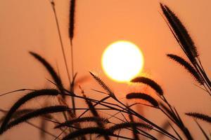 herbe au lever du soleil